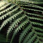 ferns by lukasdf