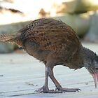 We Like Bling - Weka - NZ by AndreaEL