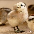 I'm Posing - Chick - NZ by AndreaEL