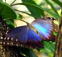 Purple and Blue Butterfly in Tree by Amy McDaniel