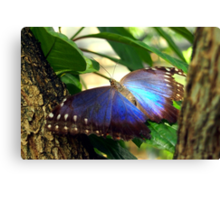 Purple and Blue Butterfly in Tree Canvas Print
