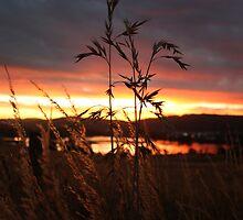 Grainy Sunset by Adam Evans