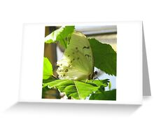 White Spring Butterfly Greeting Card