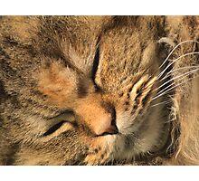 Sleeping little girl Photographic Print