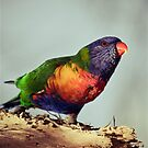Rainbows #2 by Natalie Manuel