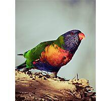 Rainbows #2 Photographic Print