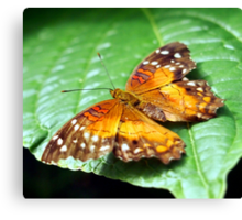Orange Spotted Butterfly Canvas Print