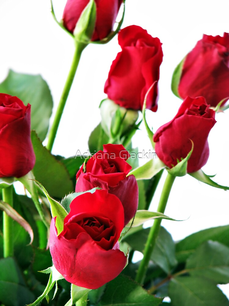 ~ red roses for my love ~ by Adriana Glackin