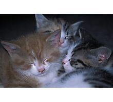 3 Little Kittens Photographic Print