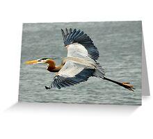 blue heron, wildlife Greeting Card