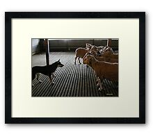 Kelpie Eye Framed Print