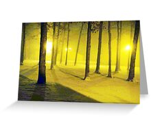 Snow / Bathed In  Golden Light    Greeting Card
