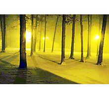 Snow / Bathed In  Golden Light    Photographic Print