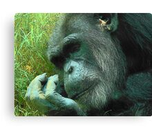 Contemplative Chimp Canvas Print