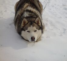 The Snow Croutch NC husky by RealPainter