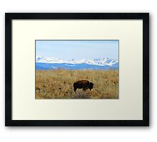 Buffalo and the Rocky Mountains Framed Print