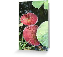 Waterlily Parasols Greeting Card