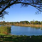 Lake by Mandy Wiltse