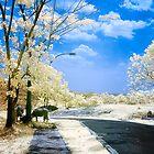 Buffalo on my way by Agus Achmadyana