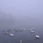 Swans in the Fog by Airwalkmax
