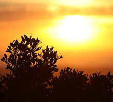 Sunset 1 by Clare Kinloch