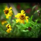 helenium by annette andtwodogs