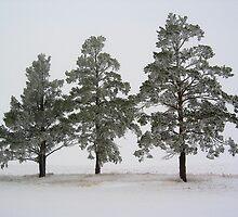 Tree Musketeers by Heath Dreger