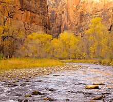 In the Canyon - Zion NP by Bob Miller