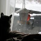 Brutus Watching His Birds by Fern Design