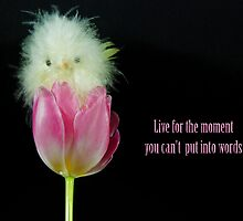 Live For The Moment by Maria Dryfhout