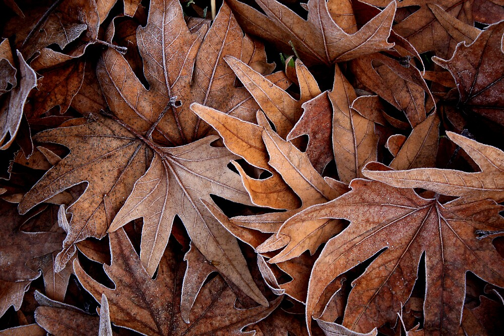 Bed of leaves by Ursula Rodgers