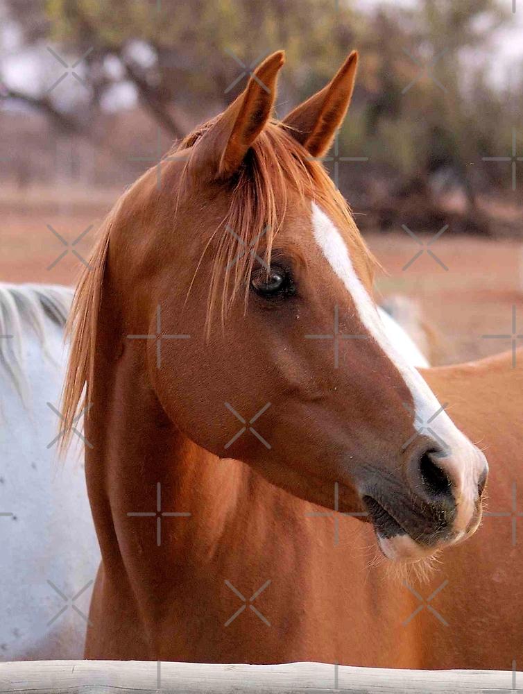 HORSE BEAUTY by Magriet Meintjes