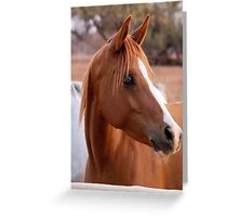 HORSE BEAUTY Greeting Card