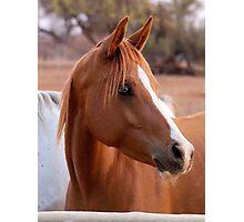 HORSE BEAUTY Photographic Print
