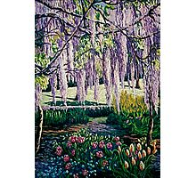 'Wisteria Walk' Photographic Print