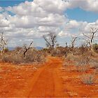 BARREN BUSH VELD WINTER IN AFRICA by Magriet Meintjes