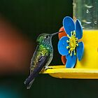 Hummingbird of Iguazu by photograham