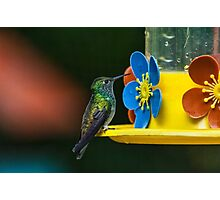 Hummingbird of Iguazu Photographic Print