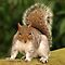 Your Favourite Squirrel Image