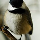 Carolina Chickadee by Bill Miller