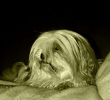 My doggy, Home, Stoke-On-Trent by Mimmiekins