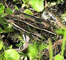 Camo Frog by sailorsedge
