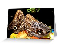 Owl Butterflies Greeting Card