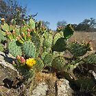 Catus Flower Blooms. by David Jones