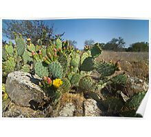 Catus Flower Blooms. Poster