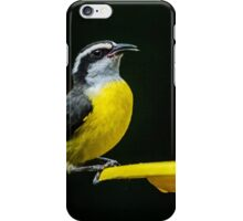 Birds of Iguazu iPhone Case/Skin