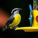 Birds of Iguazu by photograham