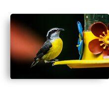 Birds of Iguazu Canvas Print