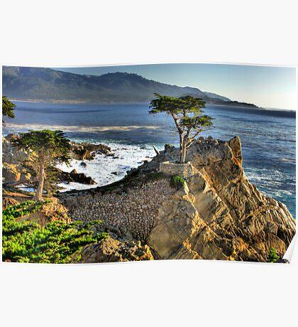 Lone Cypress at Pebble Beach Poster