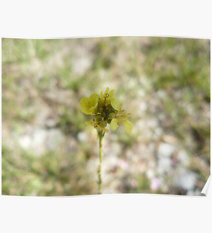 EG Flower 1 Poster